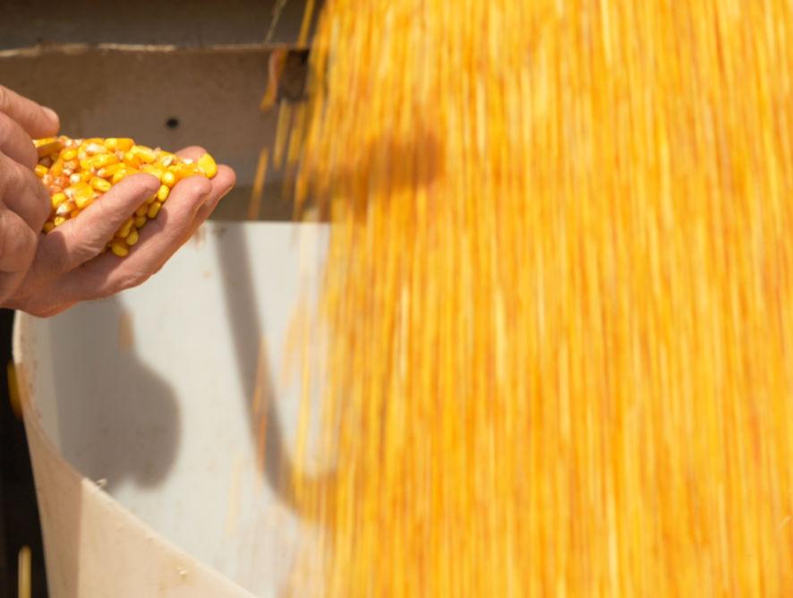 High Yield Corn Contest