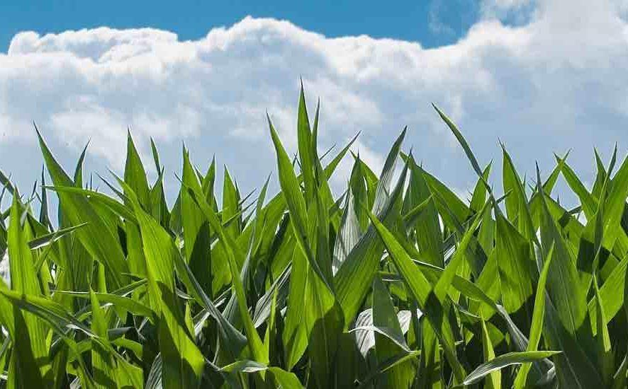 No-Till, Strip-Tillers Competitive in 2018 National Corn Yield Contest